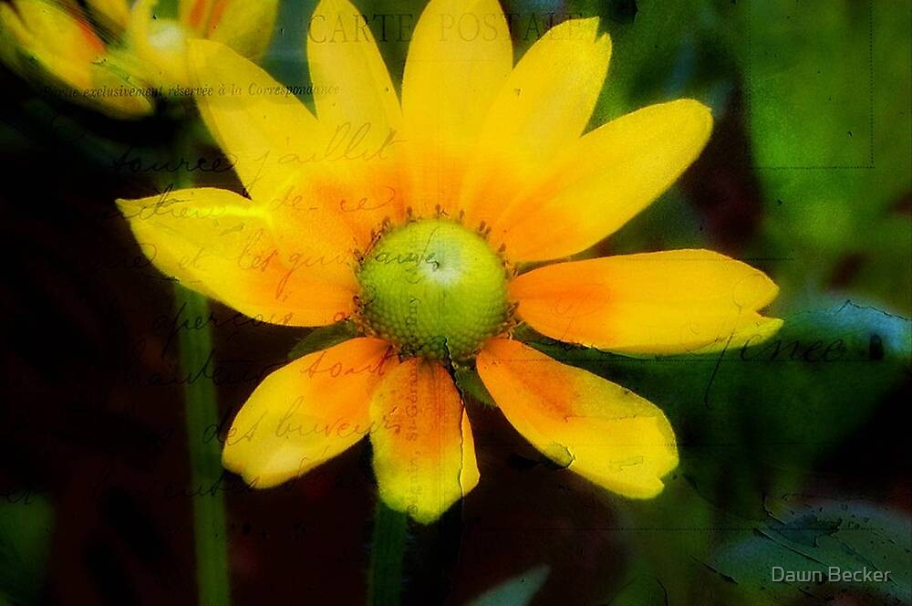 Yellow Petals!!! © by Dawn Becker