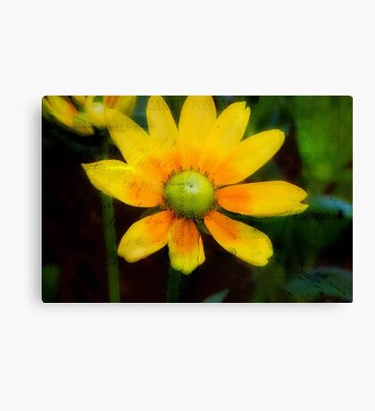 Yellow Petals!!! © Canvas Print