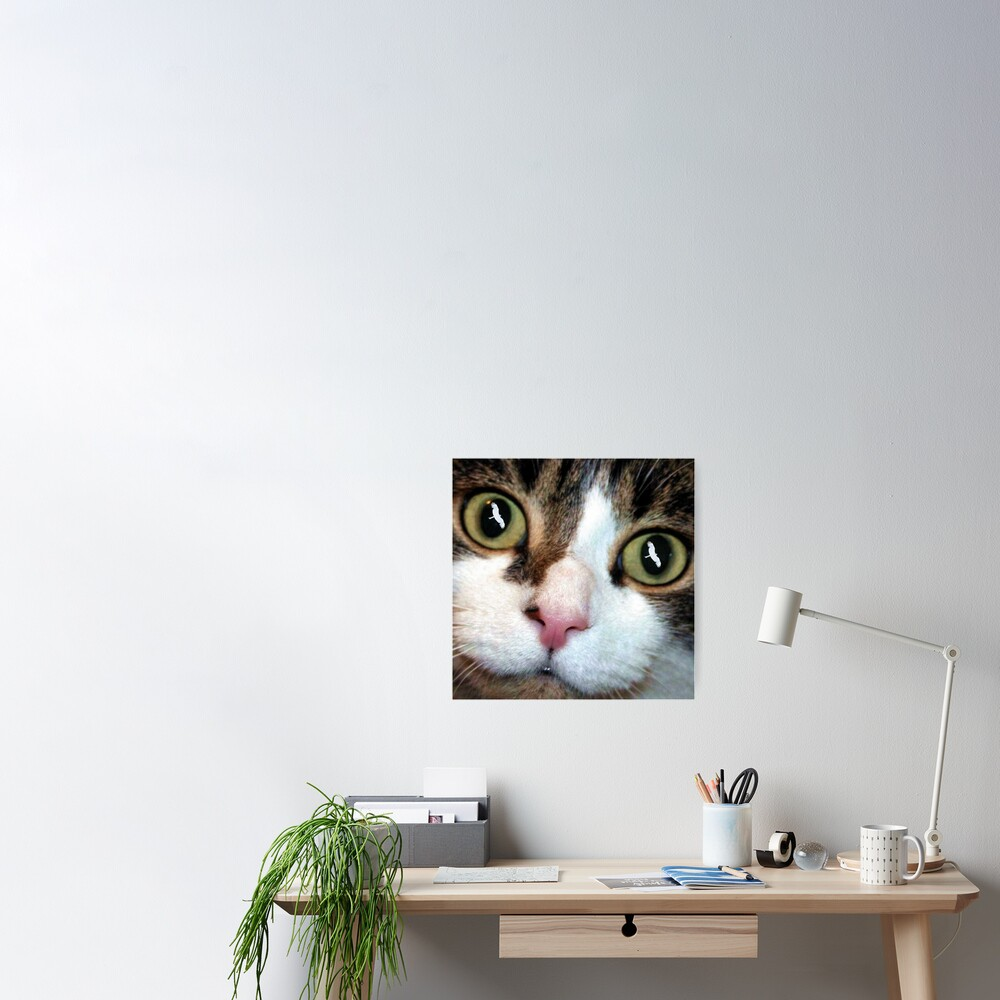 Cats Eyes Poster