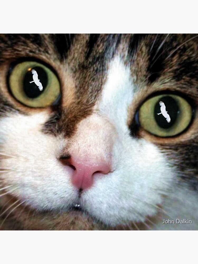 Cats Eyes by JohnDalkin