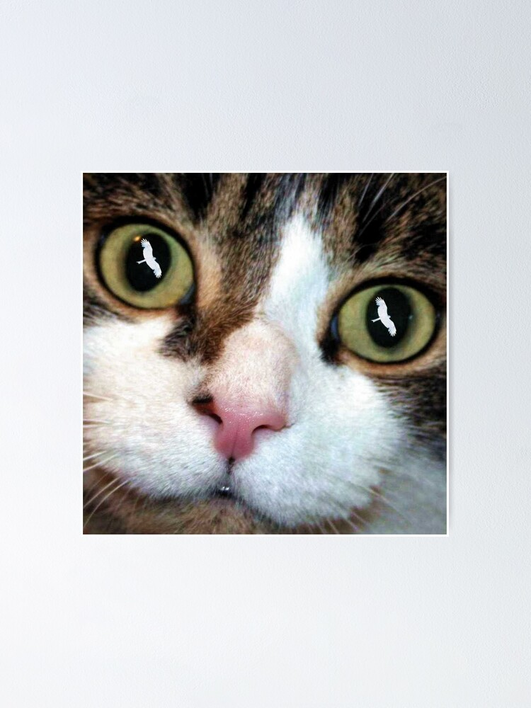 Alternate view of Cats Eyes Poster