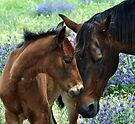 A  mothers love    Black beauty and her filly by julie anne  grattan