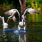Pelican 1 by Marie Holding