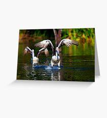 Pelican 1 Greeting Card