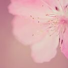 Pretty in Pink... by Angela Criss