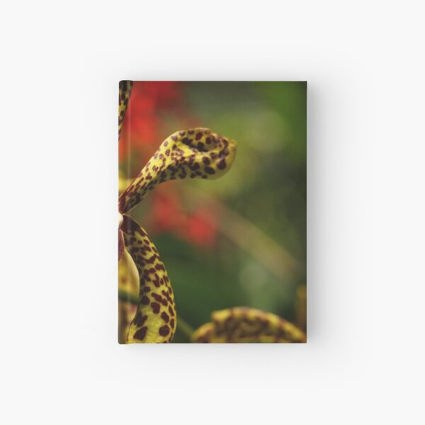 Singapore Orchids 6 Hardcover Journal