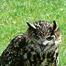 Owl Eyes by Trevor Kersley