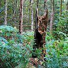 Fallen Tree by Trevor Kersley