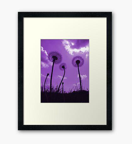Dandelions in Purple Framed Print
