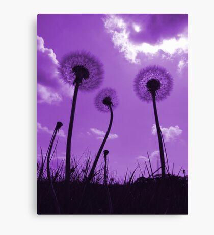 Dandelions in Purple Canvas Print