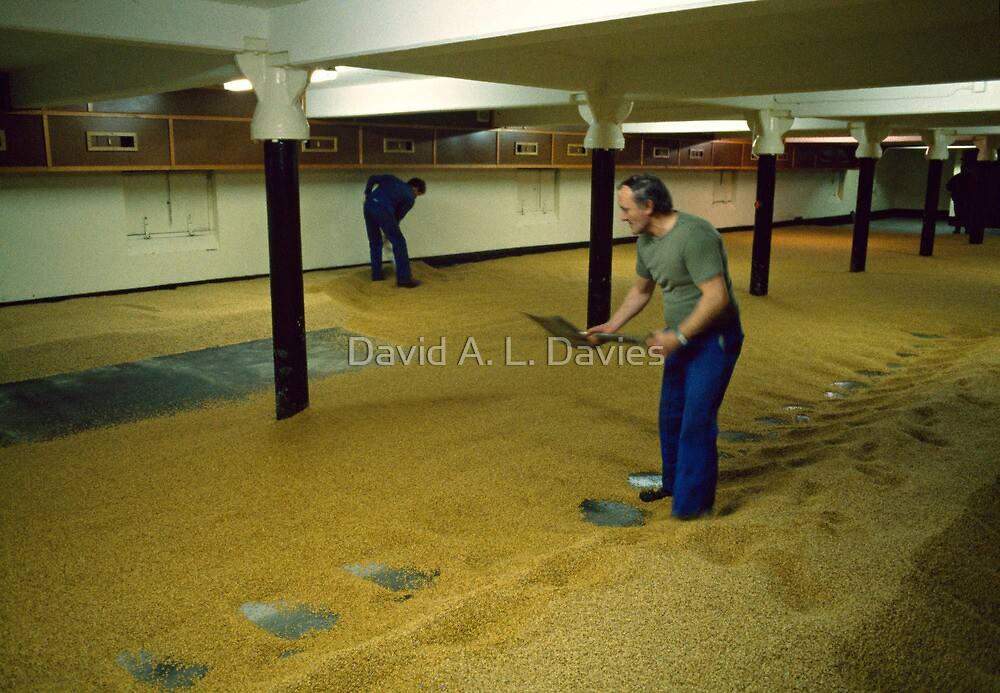 Maltsters turning malt in Langley Maltings, W. Midlands, 1980s by David A. L. Davies