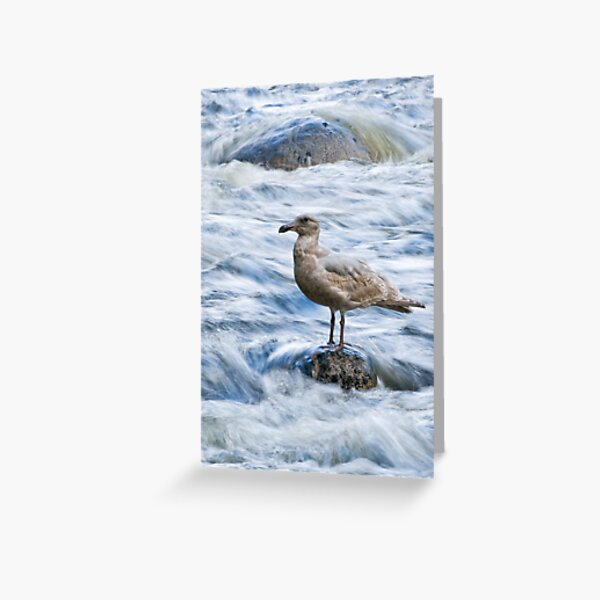 Standing Still in the River's Rush Greeting Card