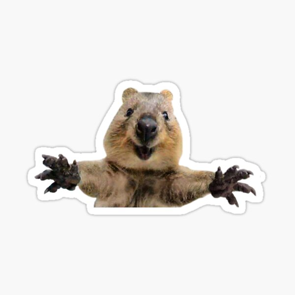 Happy quokka welcoming hug Sticker