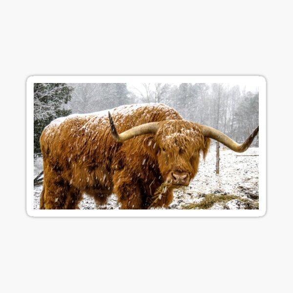 Snow Cow Sticker