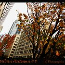 Urban Autumn 8 by Rebecca Jarboe