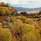 Stone Reservoir At Tippett, Nevada by Arla M. Ruggles