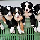 5 pups in a crate by Coralie Plozza