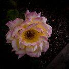 Sunset Flower by lillijy97