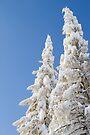 Fresh White by Walter Quirtmair