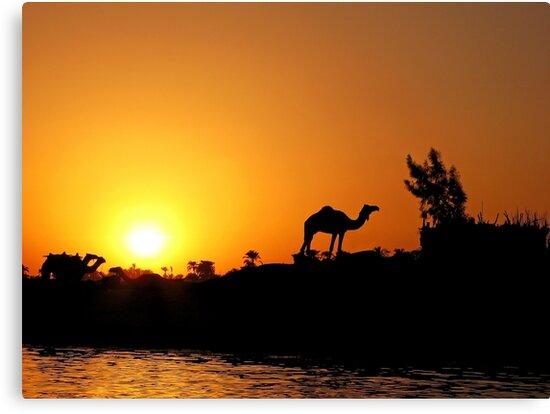 Camel by Mikhail Palinchak