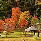 Trees of Autumn by Gordon Taylor