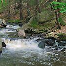 Black River - Hacklebarney State Park by Timothy Accardo