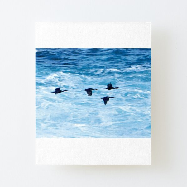 Cormorants  Skimming the Waves off Inishmore Canvas Mounted Print