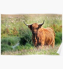 Fluffy Cow Poster