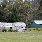 Old Shed Port Arthur Tasmania by PaulWJewell