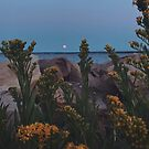 August Moonrise  by ashleyDcrouse