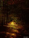 Illuminated Path by Marcia Rubin