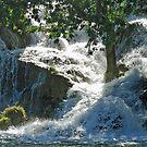 Tree resists waterfall by Arie Koene