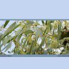 Purple-crowned Lorikeet, Glossopsitta porphyrocephala by Merrilyn Serong