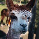 A Very Pretty Alpaca by Odille Esmonde-Morgan