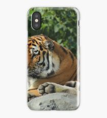 Amur Tiger at a Zoo iPhone Case/Skin