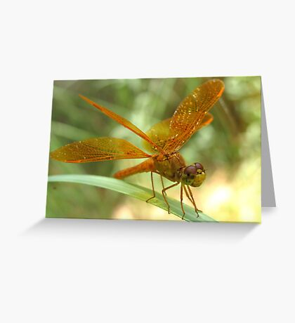 Dragonfly ~ Mexican Amberwing (Male) Greeting Card
