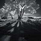 Cottonwood Shadows, Part II by Clayhaus