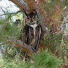 Great Horned Owl ~ Wild by Kimberly Chadwick