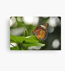 Leopard Lace Wing Canvas Print