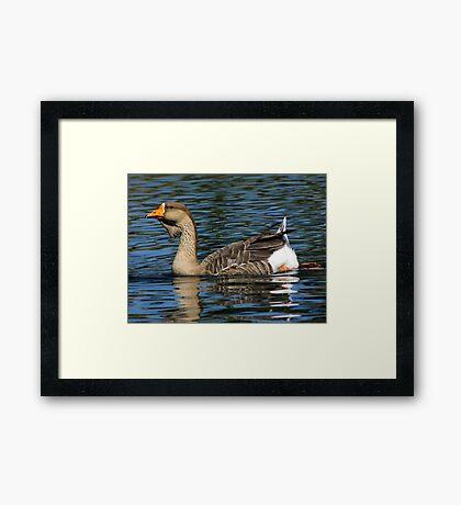 African Goose ~ Female Framed Print