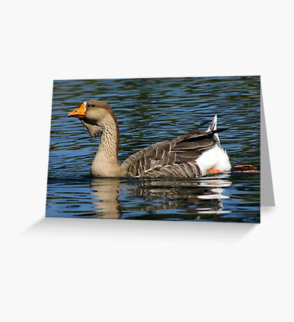 African Goose ~ Female Greeting Card