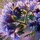 Joyful heart feelings  -  N I R V A N A  - Lady in violet . by Andrzej Goszcz. Views (576). Ok!ok! by © Andrzej Goszcz,M.D. Ph.D