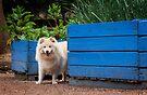 Kyla in Geelong by Helen Green