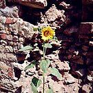 Sonnenblume vor Burg-Mauer von Gourmetkater