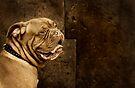 Dogue de Bordeaux by Helen Green