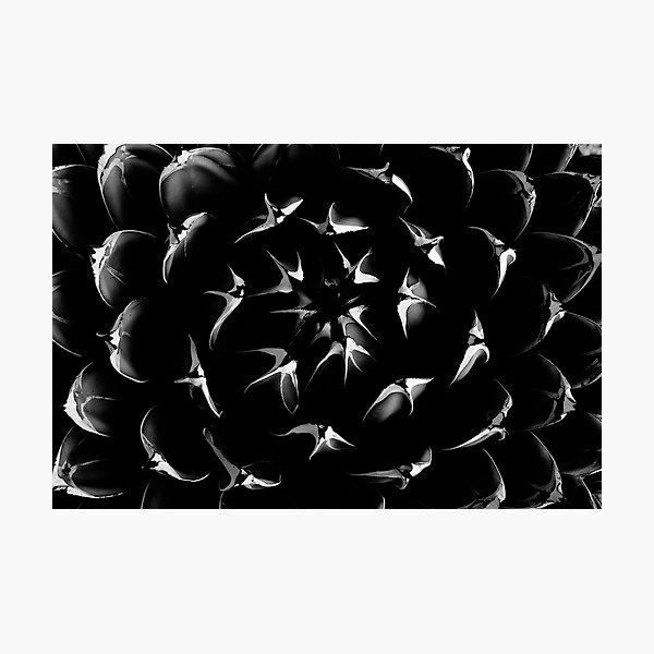 Black Beauty Photographic Print