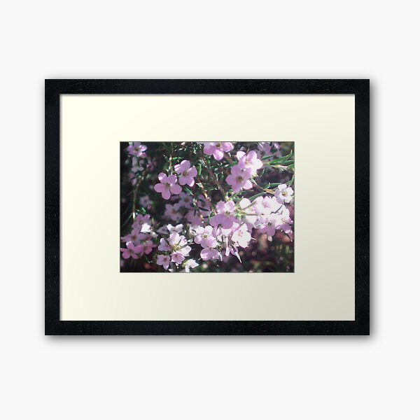 Diosma...A Tribute to Kat Framed Art Print