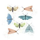 moths by jacqui-grace