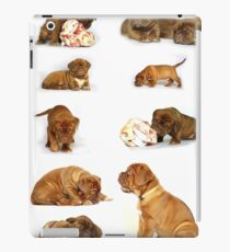 Dog chart iPad Case/Skin