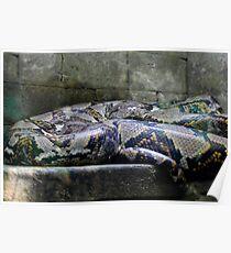 Sleeping Guardian Poster